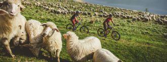 Nebuď ovce! Elementstore tě hodí do stylu!