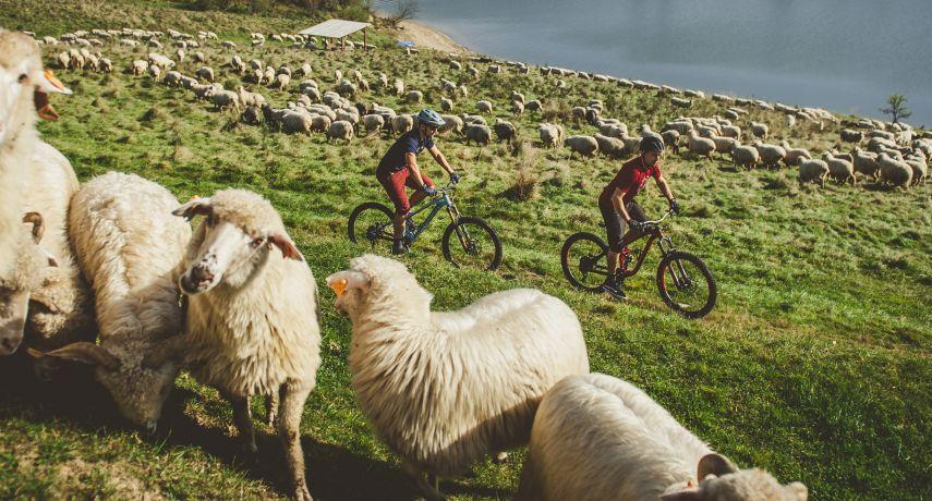 Nebuď ovce! Elementstore tě ohákne originálně!